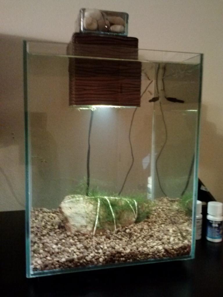 5 Gallon Aquarium Dimensions | Chi Aquarium | Fluval Chi