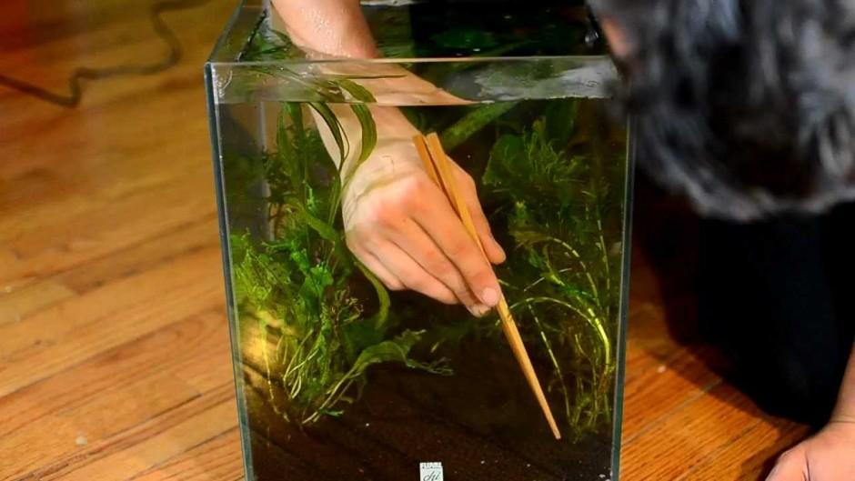 Chi Aquarium | Fluval Model 10506 | Fluval Chi
