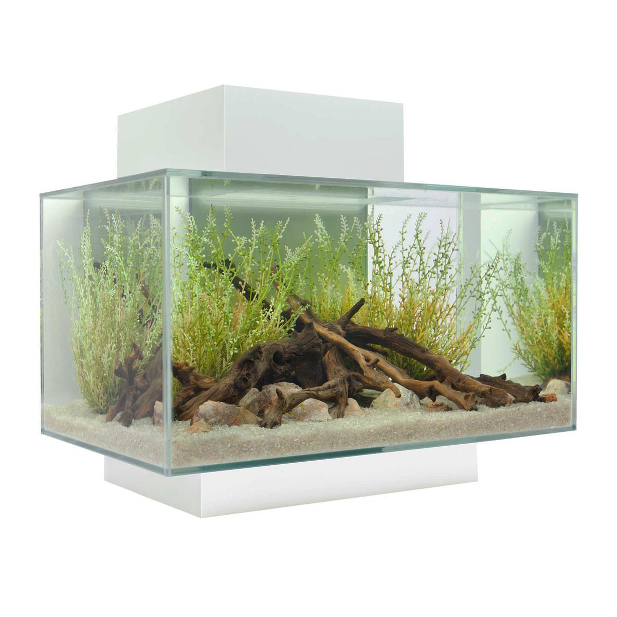 Fish for A 5 Gallon Tank | Fluval Chi | Fluval Amazon