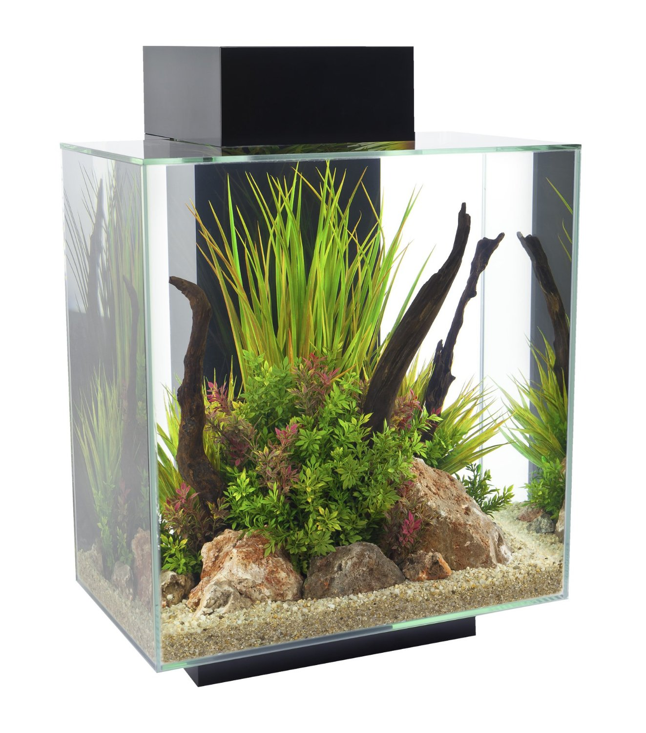 Fluval Amazon | Fluval Chi Aquarium 6.6 Gallons | Fluval Chi
