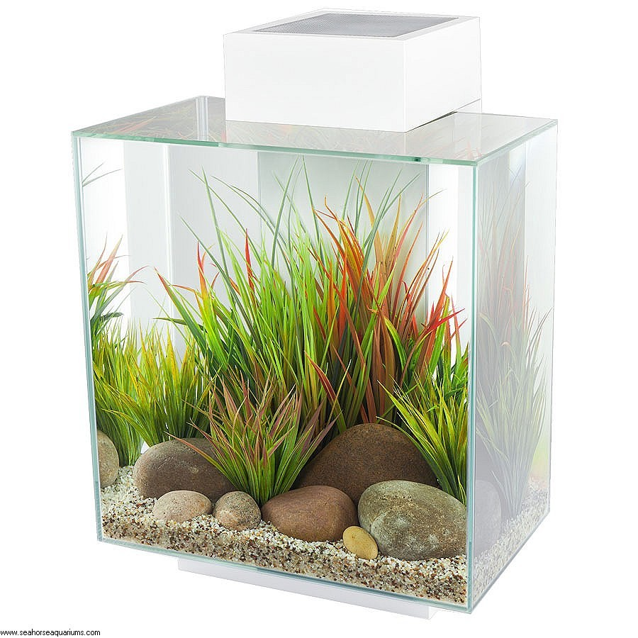Fluval Aquariums Reviews | Fluval Chi 5 Gallon Aquarium | Fluval Chi
