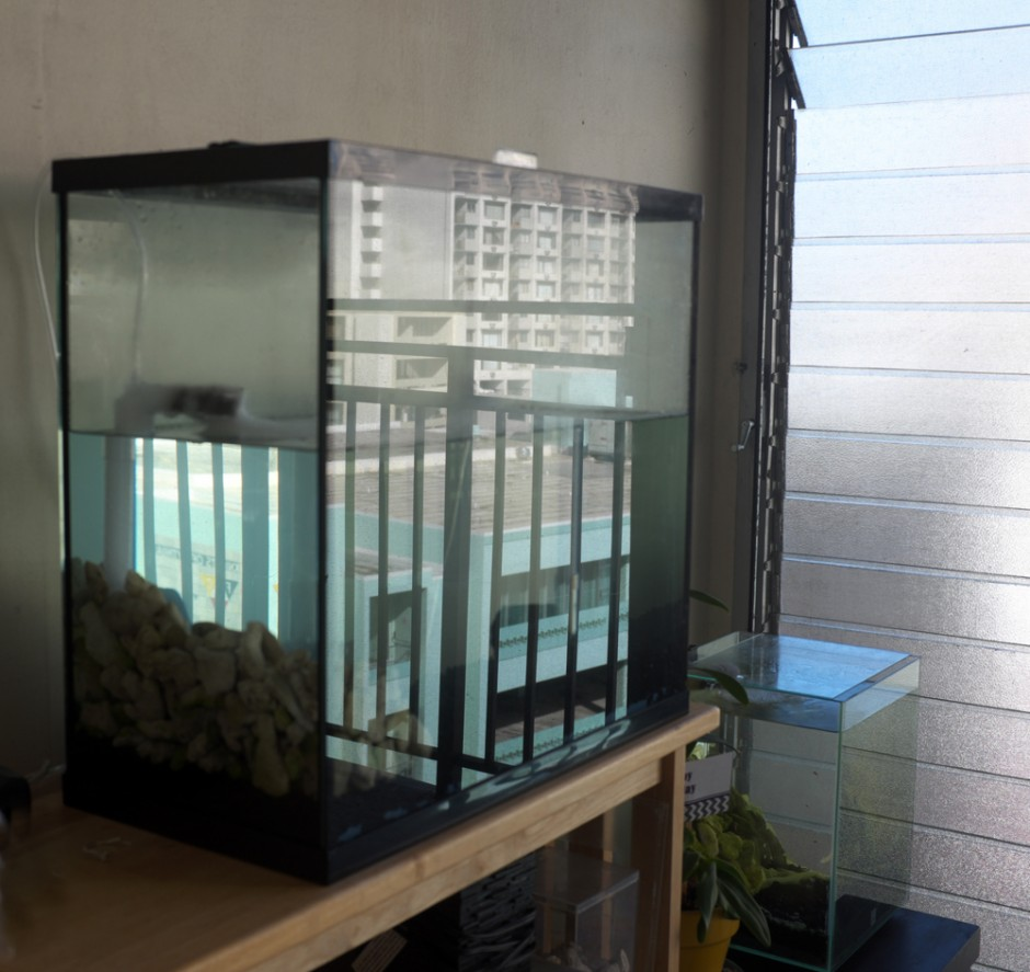 Fluval Chi Accessories | Fluval Chi Decorations | Fluval Chi