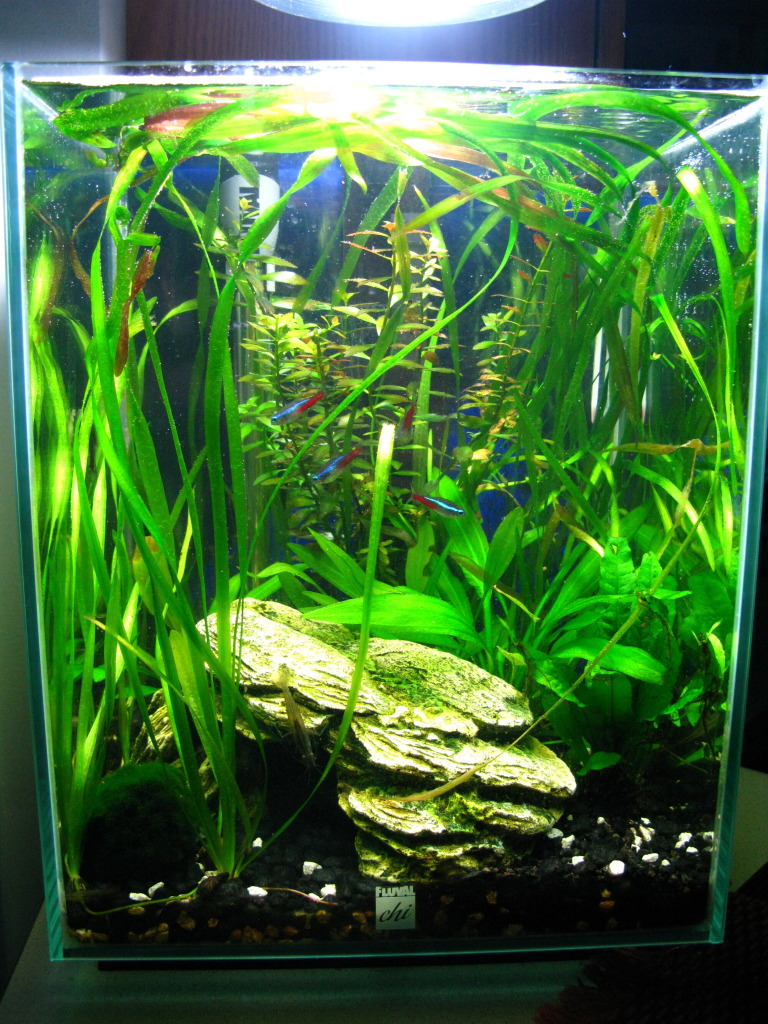 Fluval Chi Aquarium Review | Fluval Chi | Fluval Amazon