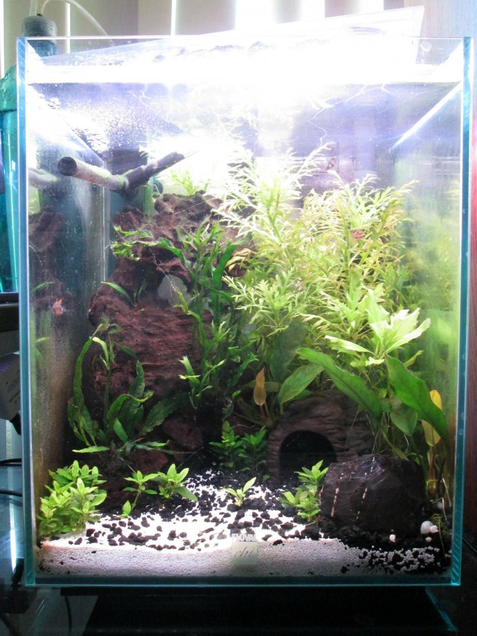 Fluval Chi Cover | Fluval Chi Fish Tank | Fluval Chi