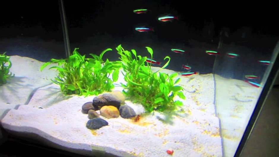 Fluval Chi Cover Lid | Fluval Chi Replacement Filter | Fluval Chi