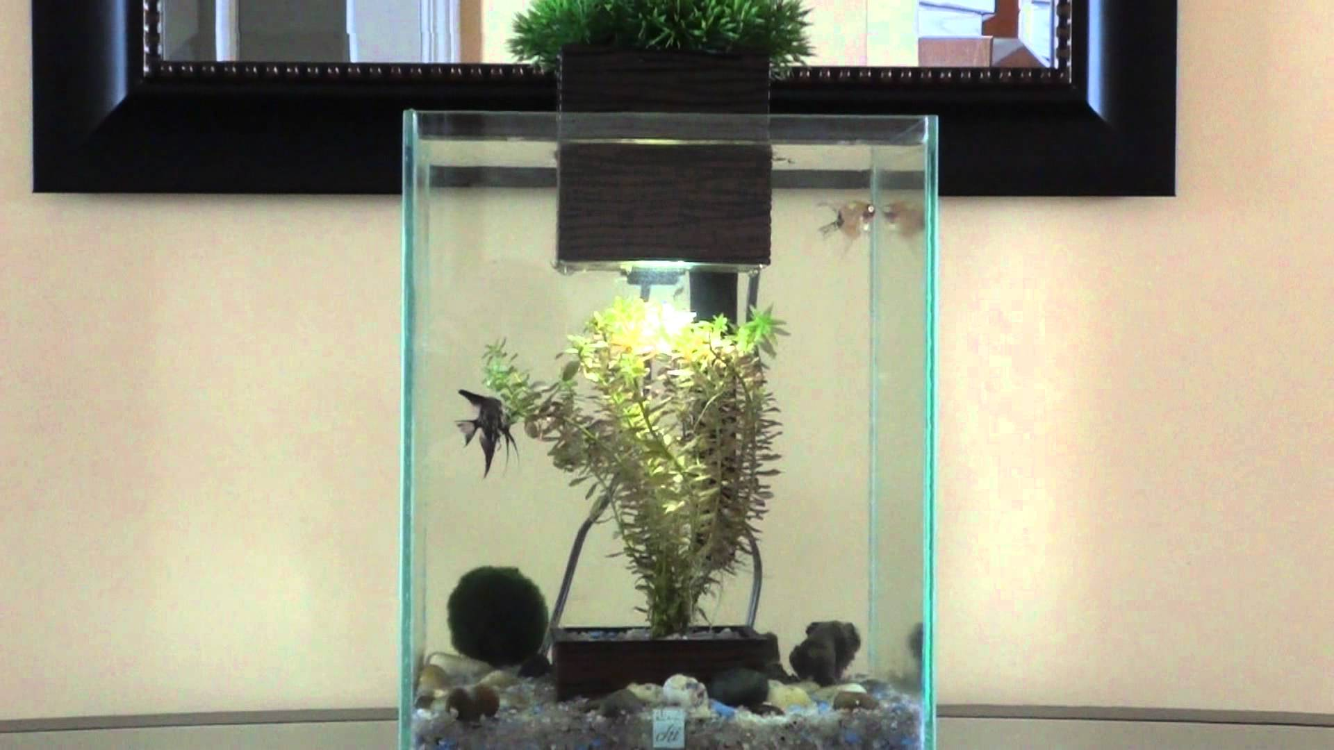 Fluval Chi | Fluval Chi Aquarium Cover | Fish for A 5 Gallon Tank