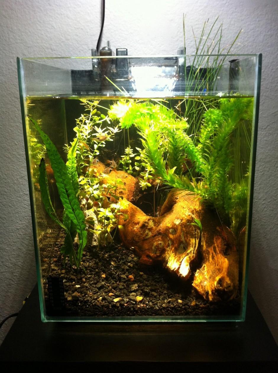 fluval chi aquarium cover 1000 aquarium ideas. Black Bedroom Furniture Sets. Home Design Ideas