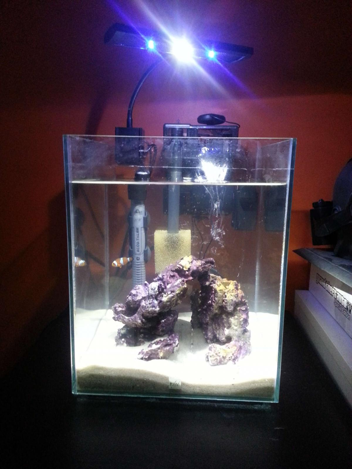 Fluval Chi | Fluval Chi Light | Fluval Chi 5 Gallon Aquarium