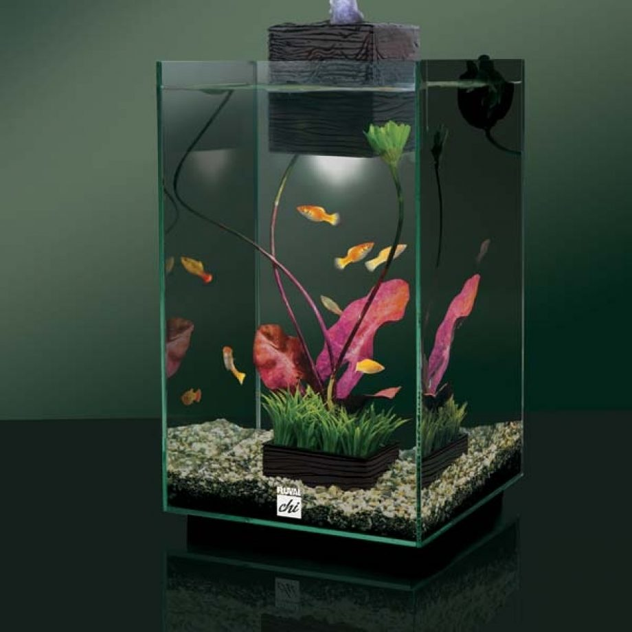 Fluval Chi | Fluval Chi Tank | Dimensions of A 5 Gallon Fish Tank