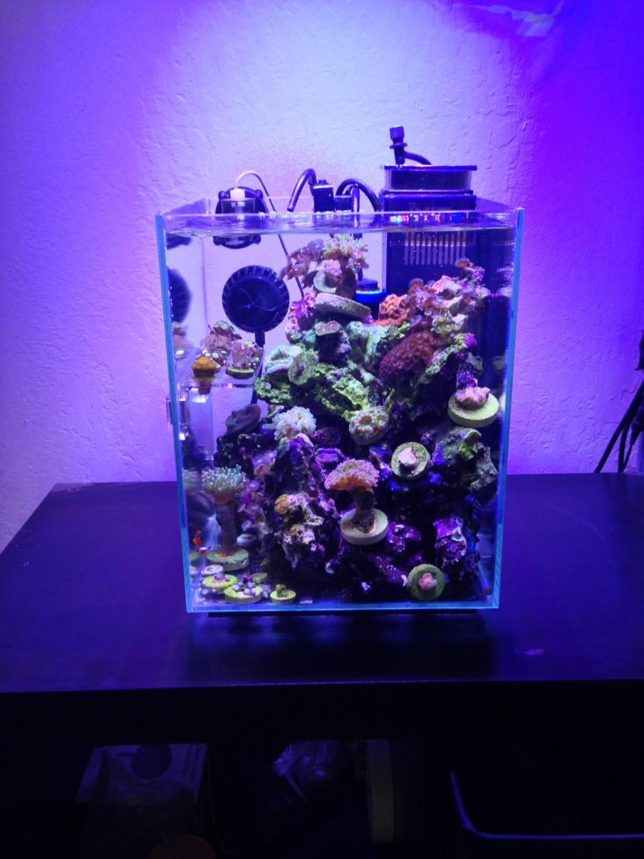 Fluval Chi Parts | Fluval Chi | 5 Gallon Fish Tank Betta