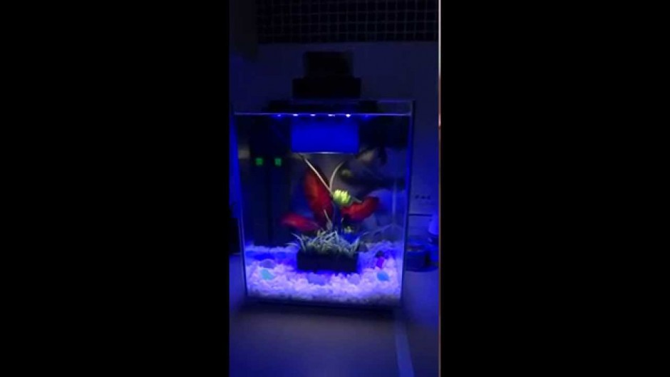 Fluval Chi Review | How Big Is A 5 Gallon Fish Tank | Fluval Chi