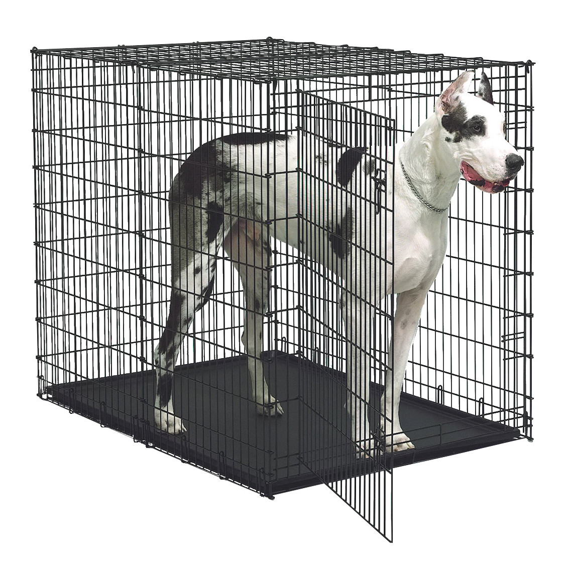 Midwest Life Stages Double-door Folding Metal Dog Crate | Midwest Dog Crates | Medium Dog Crate