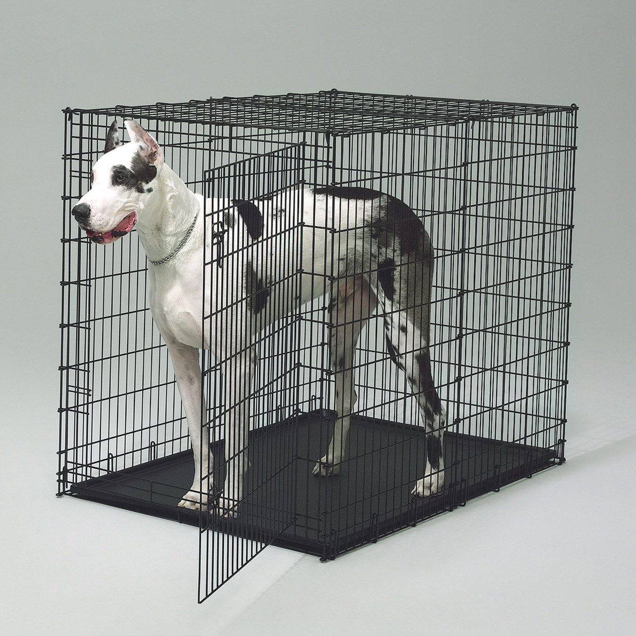 Top Paw Dog Crate | Amazon Dog Crate Large | Midwest Dog Crates
