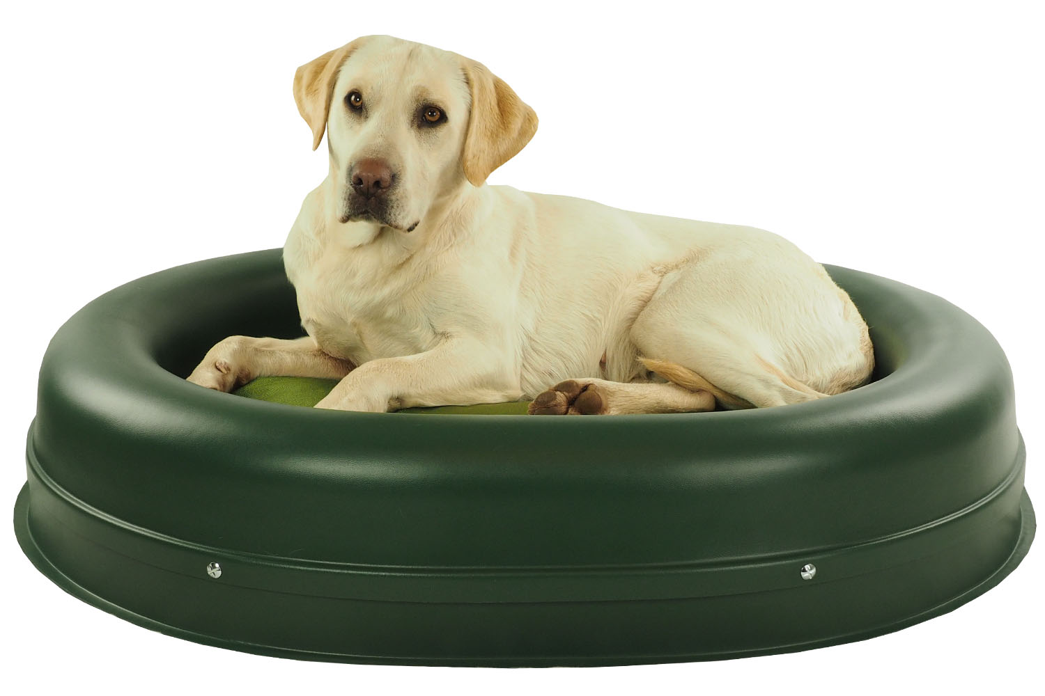 tips: chew proof dog bed | best chew proof dog bed | most durable