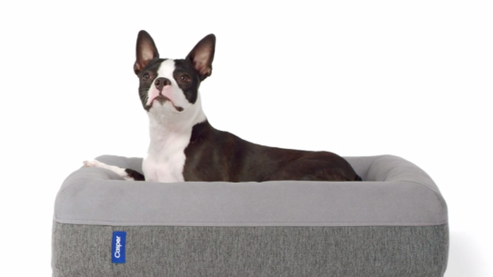 tips: chew proof dog bed | dog crate pad | pet cot