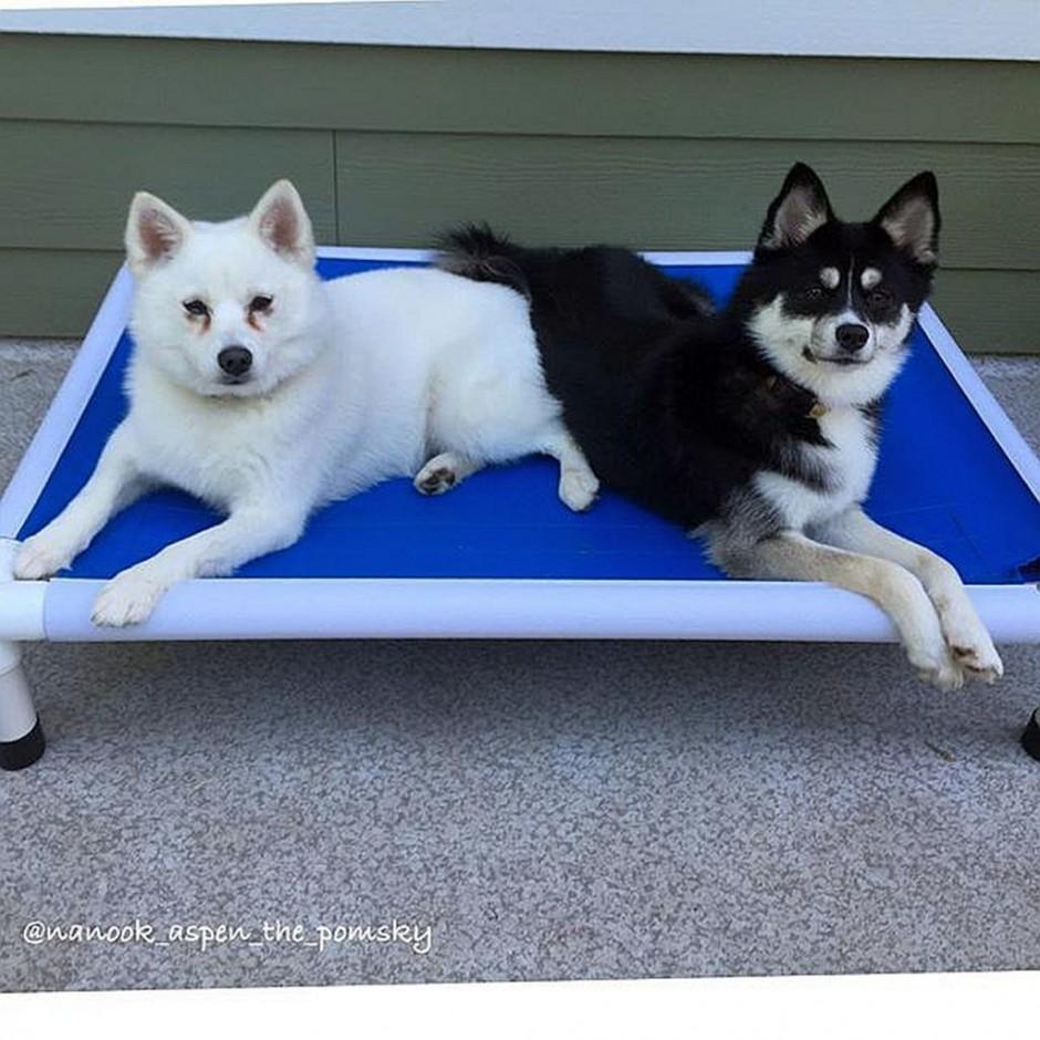 Kuranda Beds   Chew Proof Dog Bed   Chew Proof Dog Toys