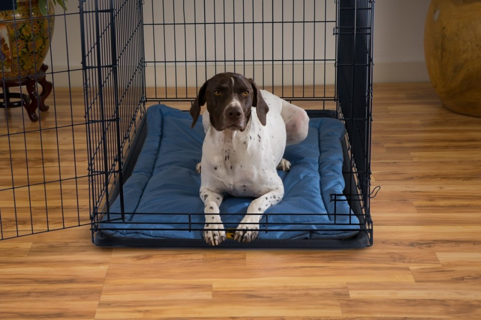 Pet Cot | Chew Proof Dog Bed | Chew Proof Dog Harness