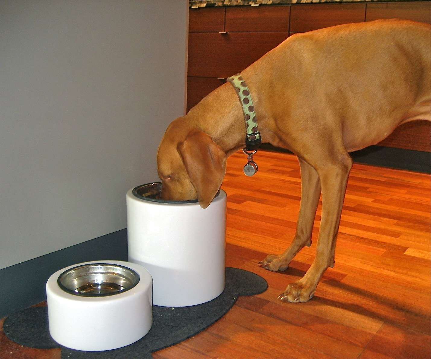 Elevated Dog Bowls with Storage | Single Bowl Raised Dog Feeder | Elevated Dog Bowls